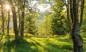 Einzigartige Einblicke in Landschaften
